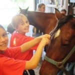 Meet the Horses at Camp Ondessonk